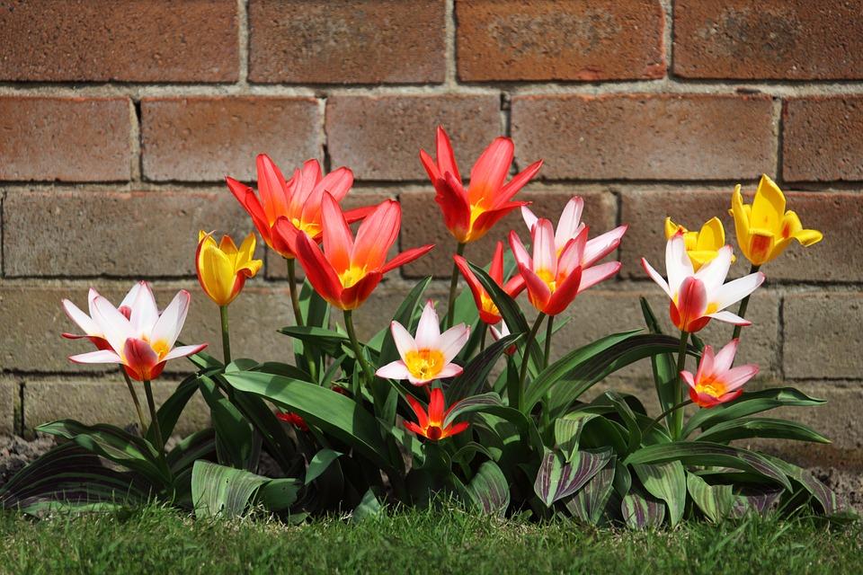 bloom-2518_960_720